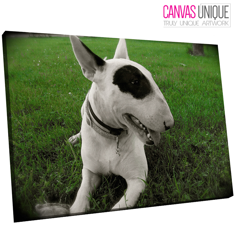 A193 Weiß bull terrier  puppy dog Animal Canvas Wall Art Framed Picture Print