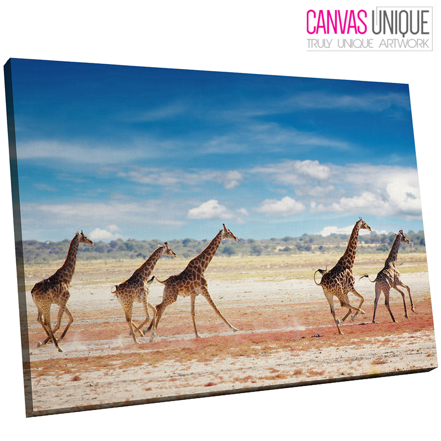 A278 African Plain Herd Of Giraffe Animal Canvas Wall Art Framed Picture Print