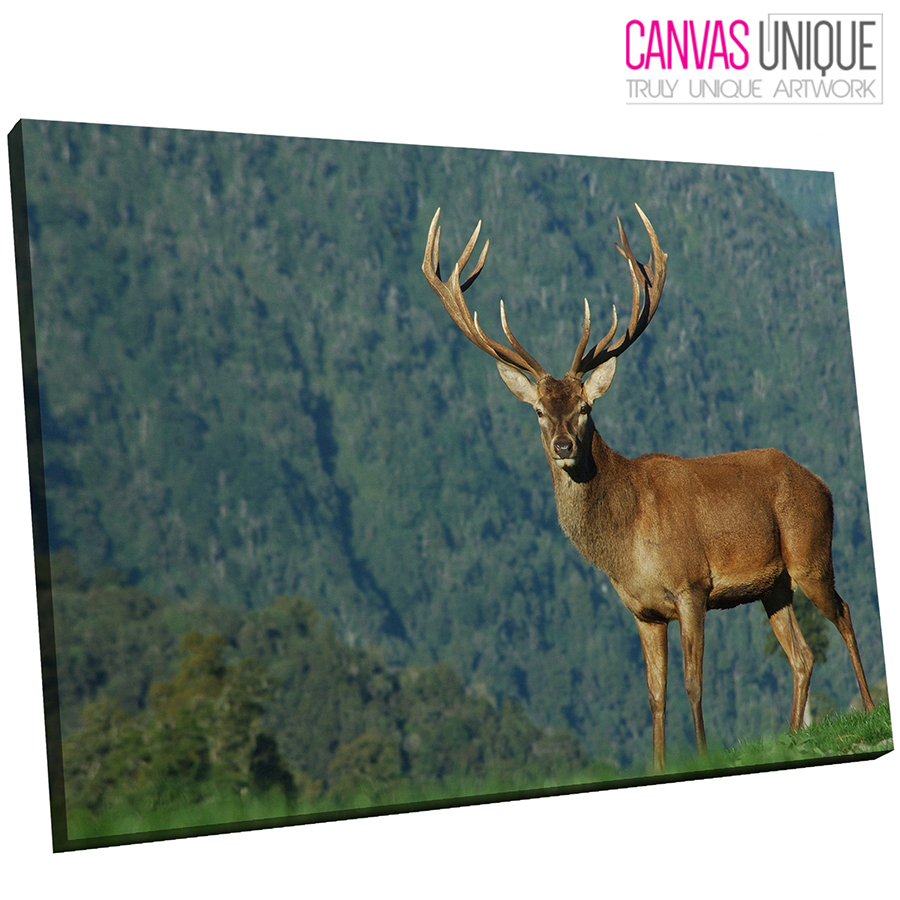 A498 Grasslands braun Stag Scouting Animal Canvas Wall Art Framed Picture Print