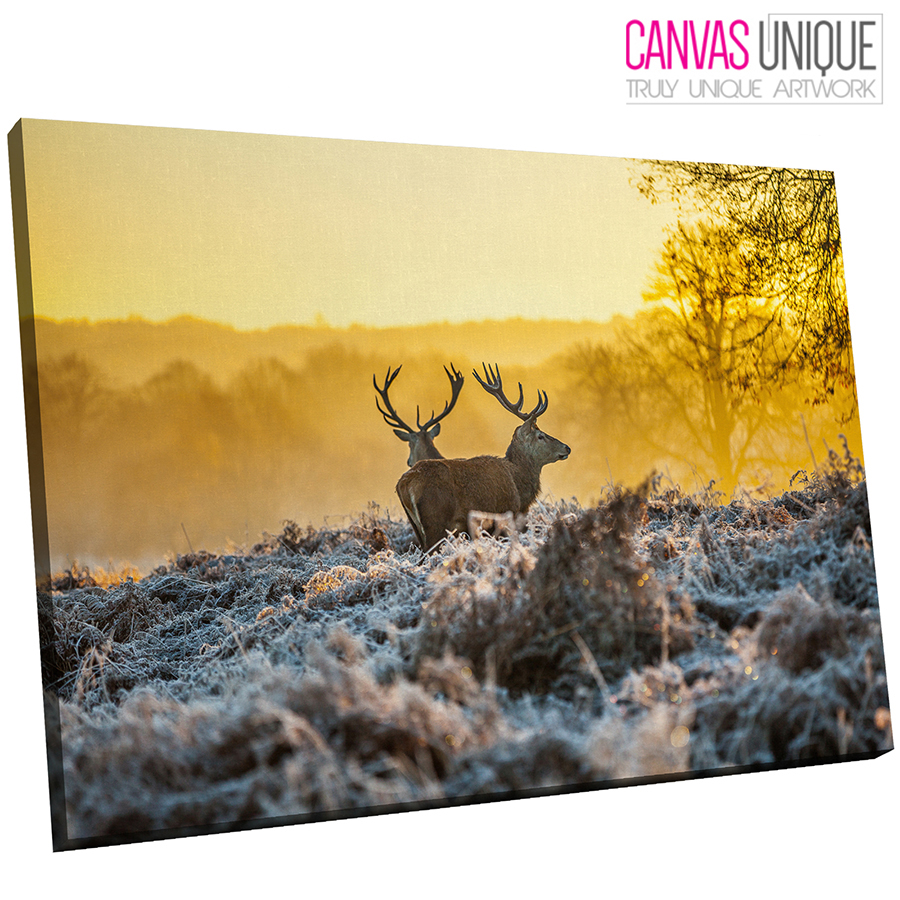 A557 Yellow Sunrise Two Stags Forest Animal Canvas Wall Art Framed ...