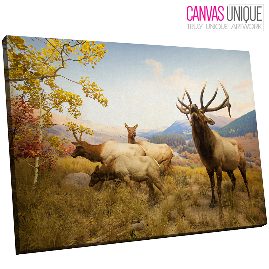A591 Herd Of Deer Bellowing Vally Animal Canvas Wall Art Framed Picture Print