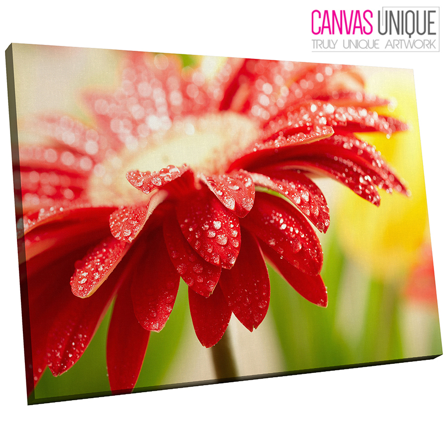 AB128 rot Floral Water Drops Abstract Canvas Wall Art Framed Picture Print