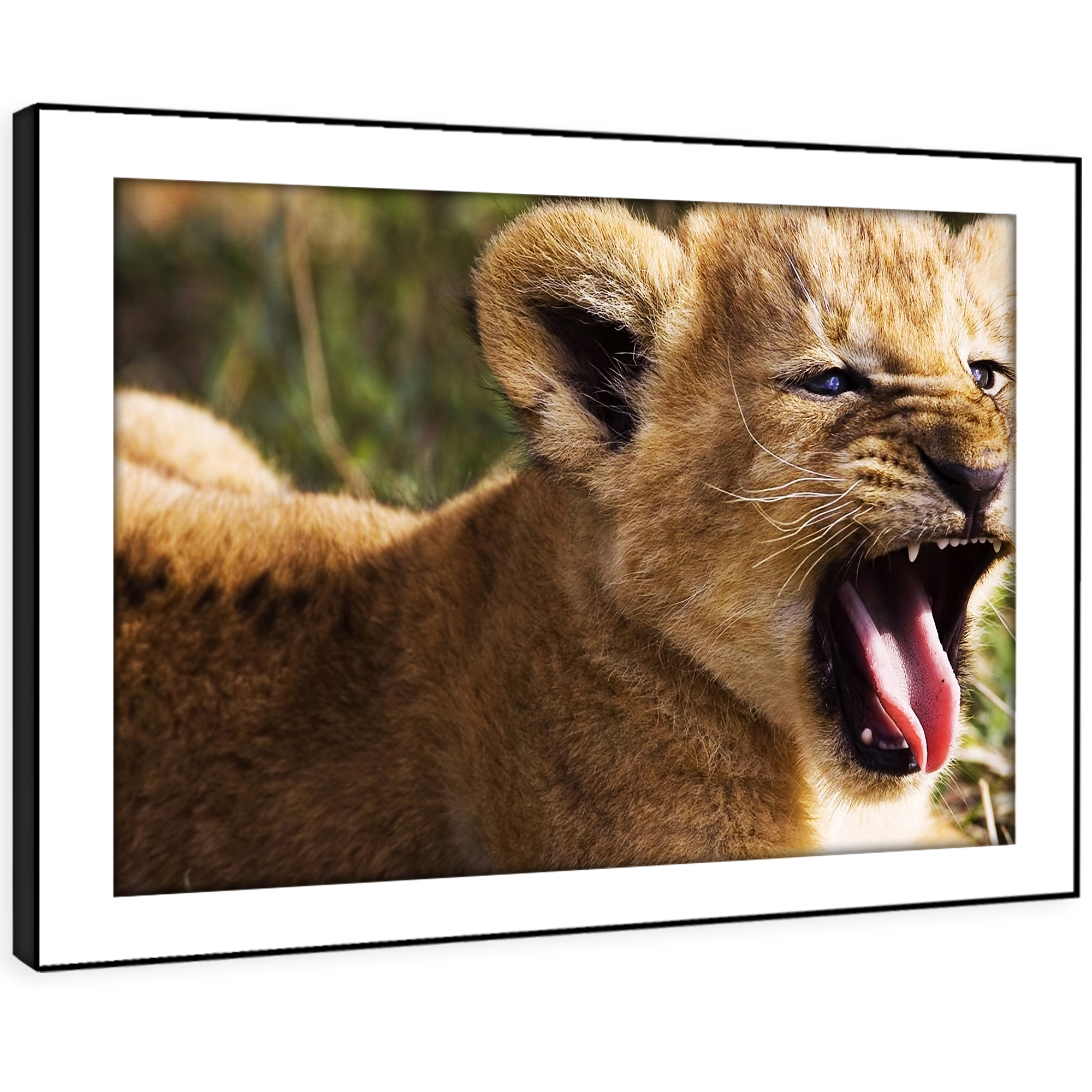 A066 braun Lion Cub Cat Orange Funky Animal Framed Wall Art Large Picture Prints
