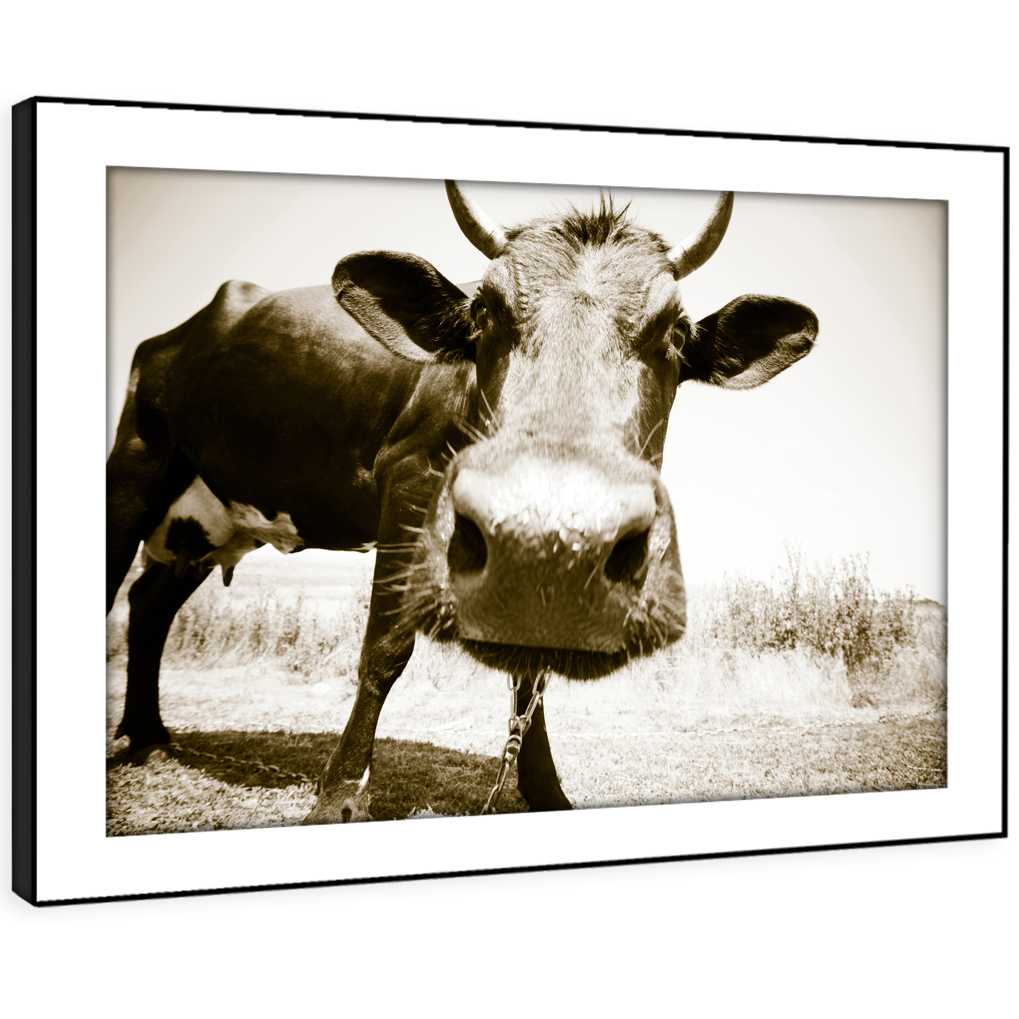 A104 Sepia Cow Cool Farm braun Funky Animal Framed Wall Art Large Picture Prints