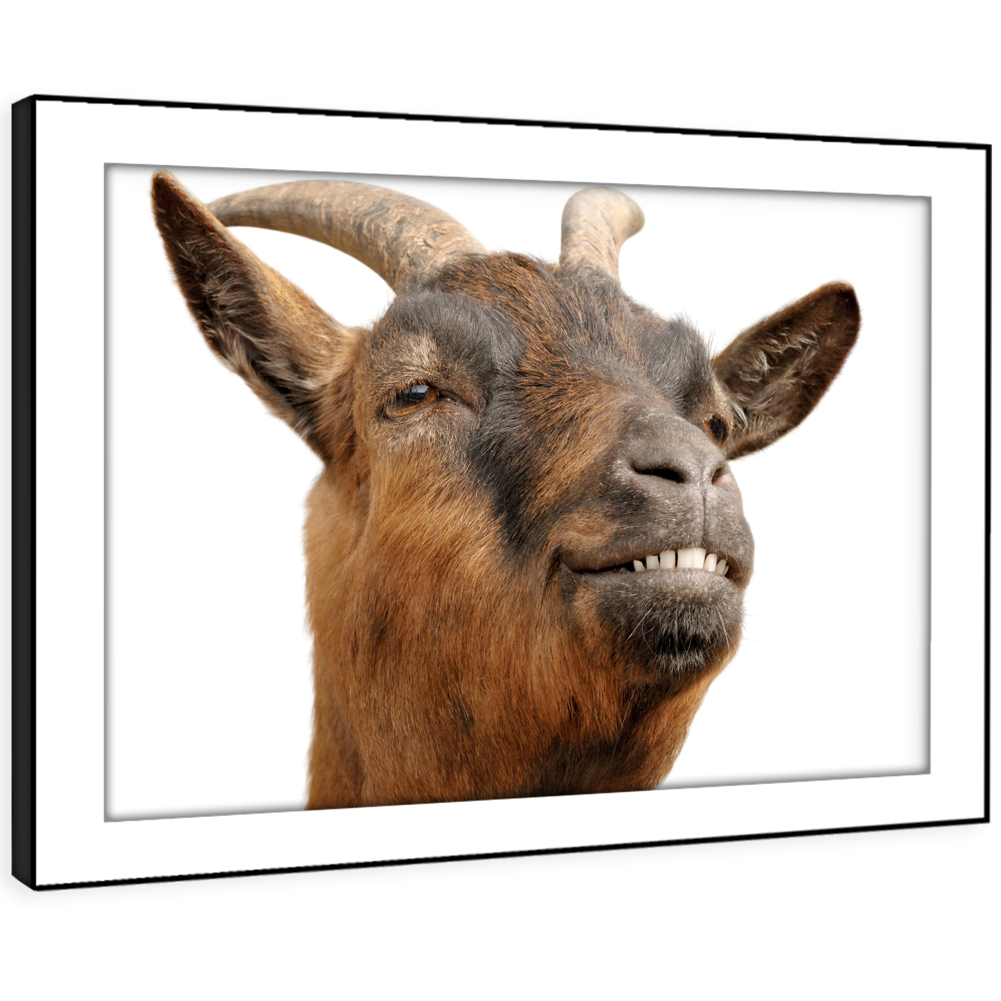 A134 Goat braun Weiß Funny Funky Animal Framed Wall Art Large Picture Prints