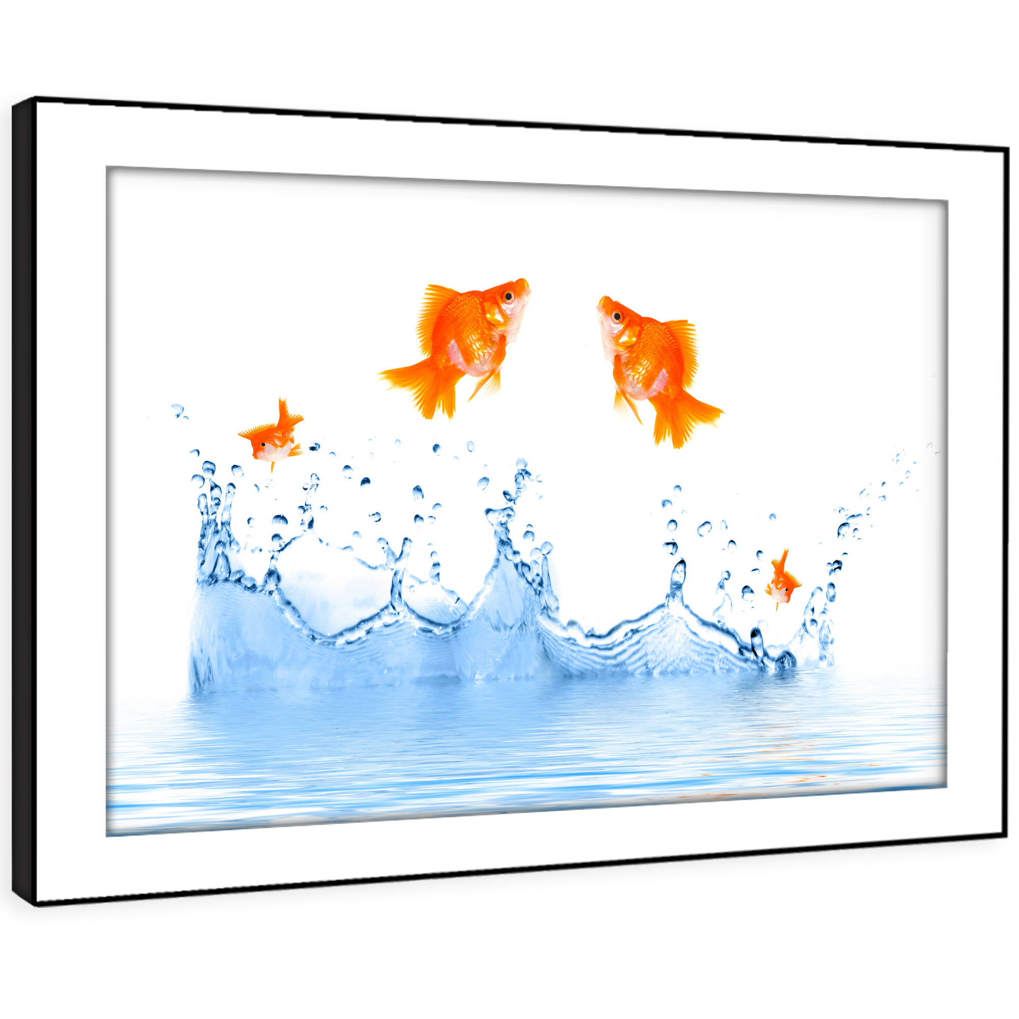 A276 Goldfish Water Orange  Funky Animal Framed Wall Art Large Picture Prints