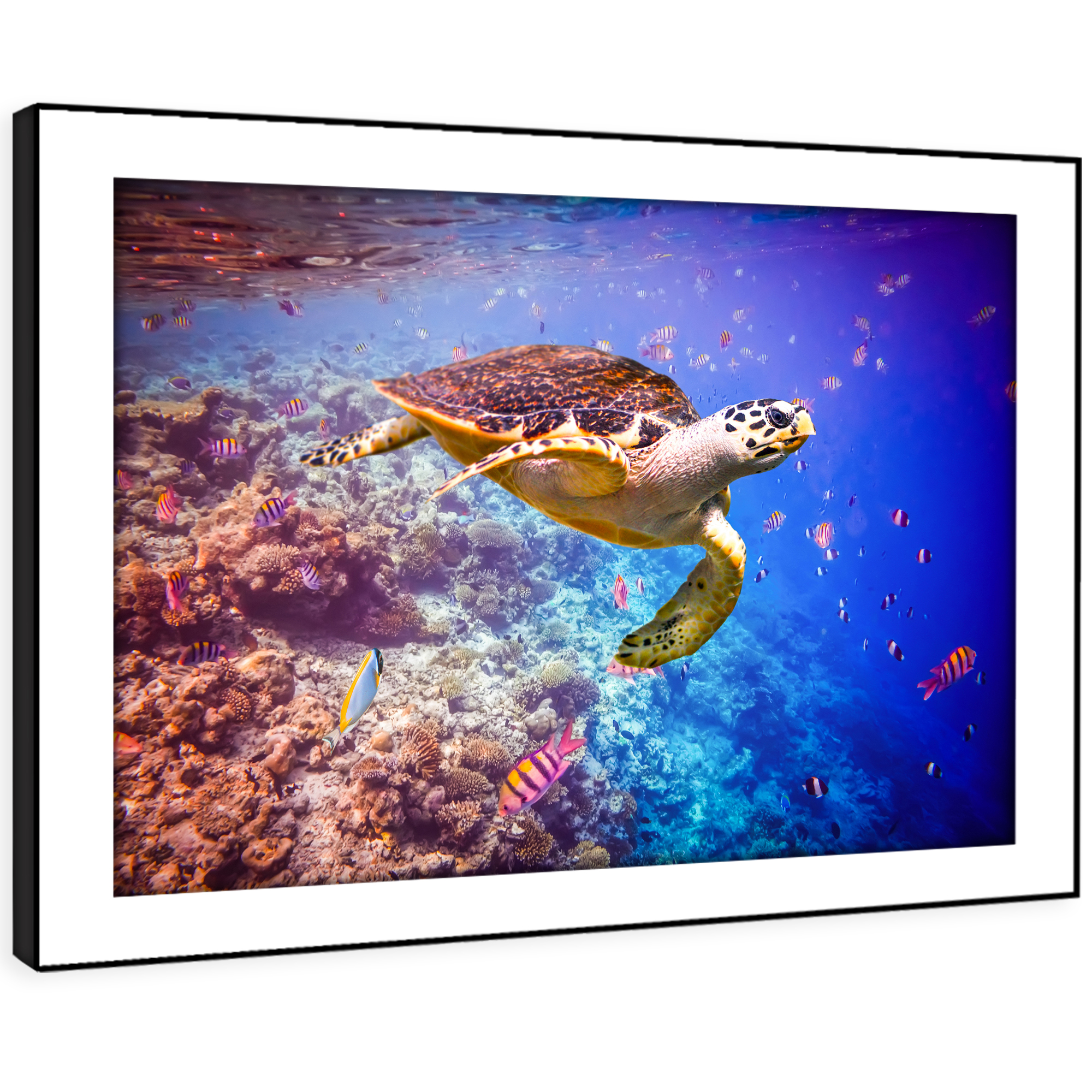 A445 Ocean Coral Reef  Turtle Funky Animal Framed Wall Art Large Picture Prints