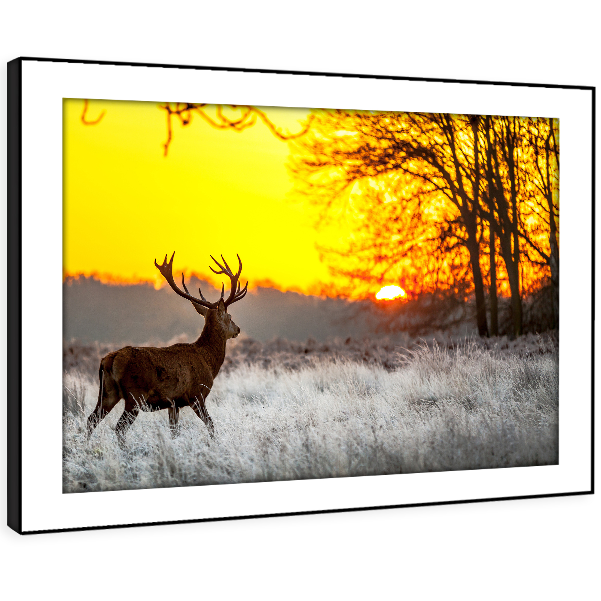 A492 Sunset Forest Stag Deer Funky Animal Framed Wall Art Large Picture Prints