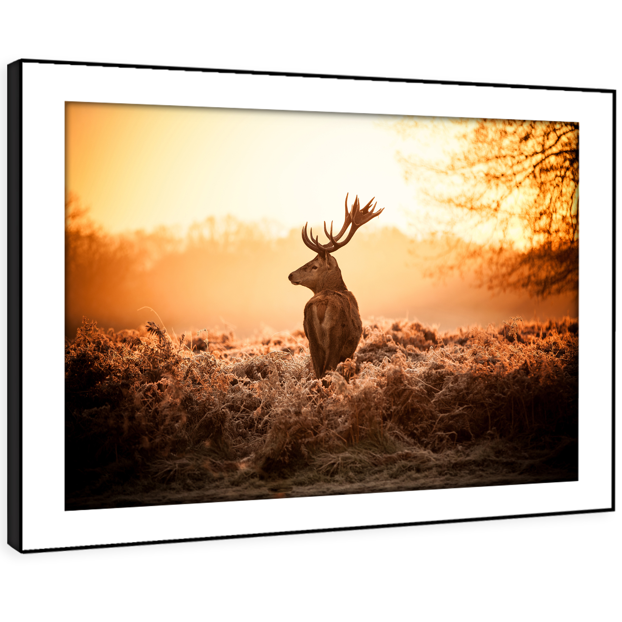 A571 Orange Stag Sunset Forest Funky Animal Framed Wall Art Large Picture Prints