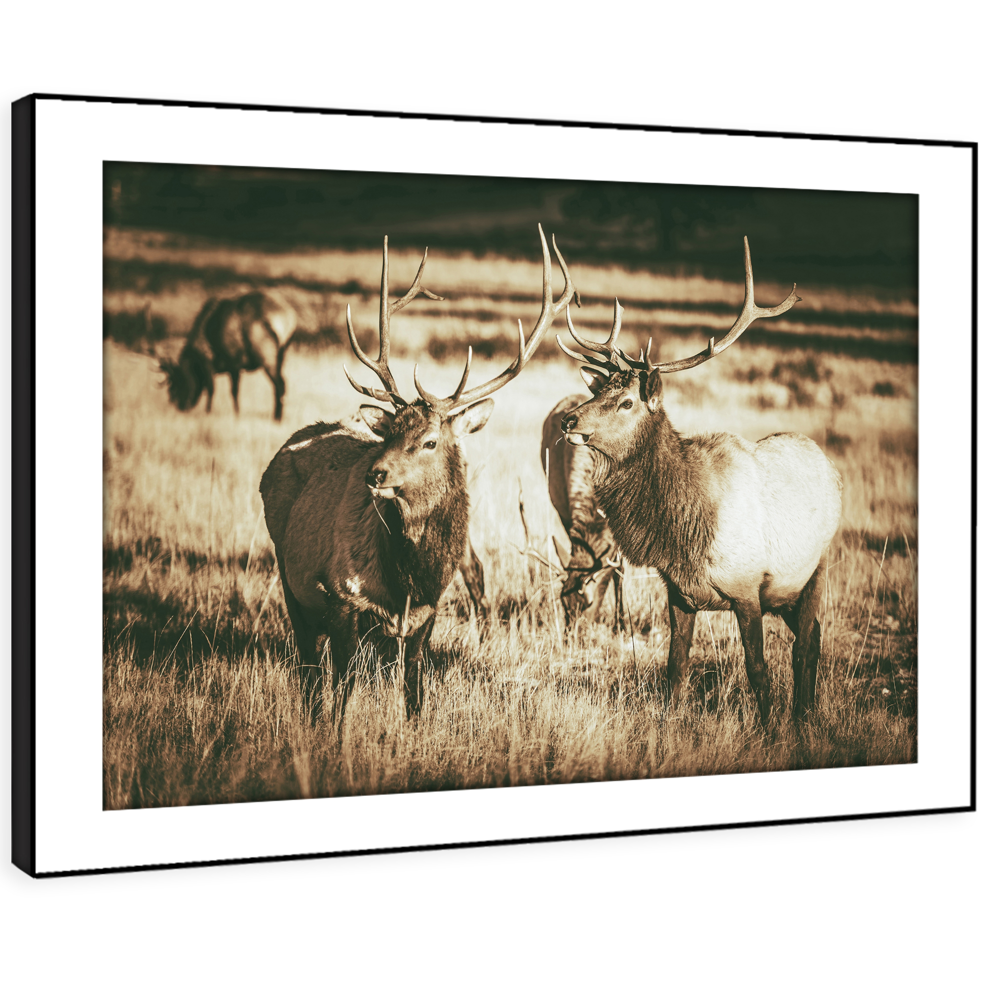 A592 Sepia Stag Herd braun  Funky Animal Framed Wall Art Large Picture Prints