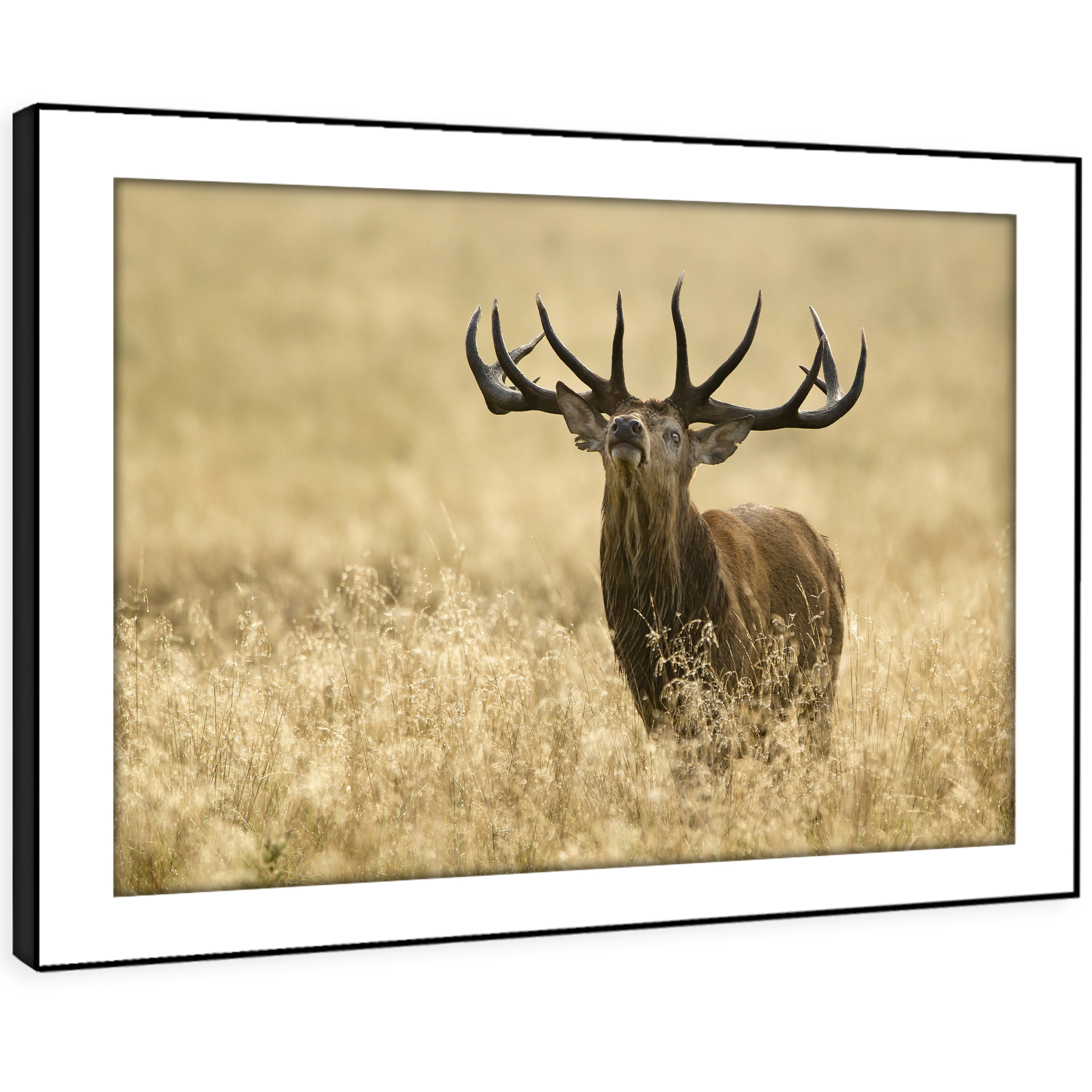 A636 braun Stag Gelb Grass Funky Animal Framed Wall Art Large Picture Prints